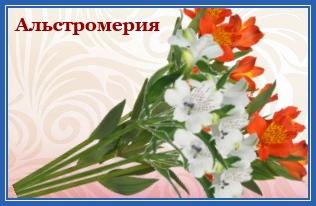 Альстромерия