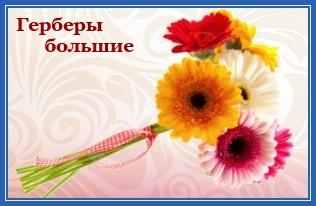 Герберы большие, цветы к мощам блаженной Матроны