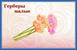 Герберы малые, цветы к мощам блаженной Матроны