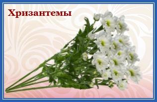 Хризантемы святой Матроне