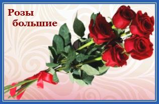 Розы большие