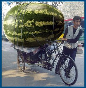Самый большой арбуз