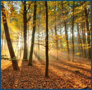 Осень лесная, солнечная