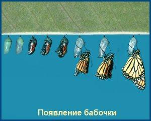 Появление бабочки