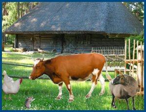 Корова, овца, курица и мышь