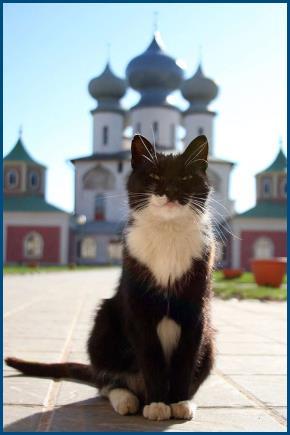 Кот, у храма