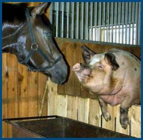 Свинья и лошадь