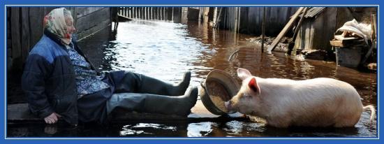 Наводнение, бабушка, свинья