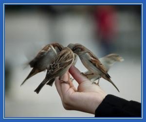 Птицы, воробьи, доброта, доверие