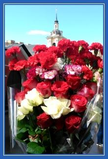 Цветы, гвоздики