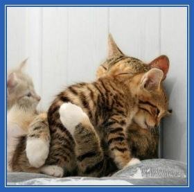 Кошечки, котята