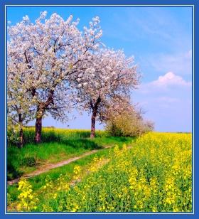 Май, природа, цветы