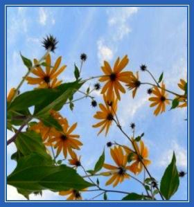 Цветы, небо, весна