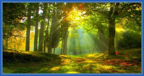 Июньски лес, лето