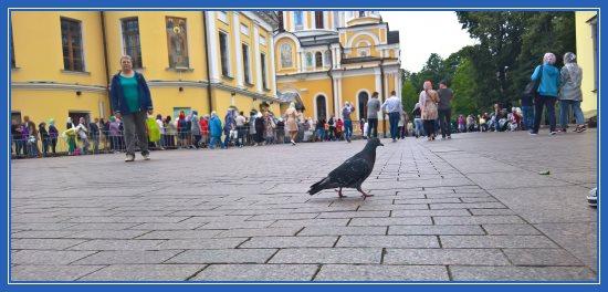 Голубь на площади Покровского монастыря