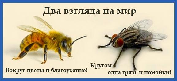 Два взгляда на мир. Пчела и муха