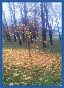 Осень, клен