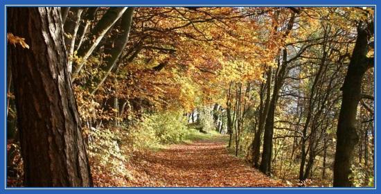 Осень, парк, листья