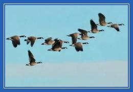 Перелетные птицы, улетают, прилетают