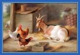 Козочка, коза