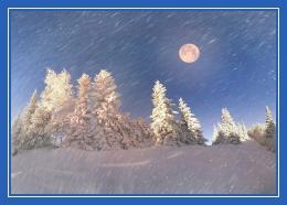 Луна, ель, зима, снег
