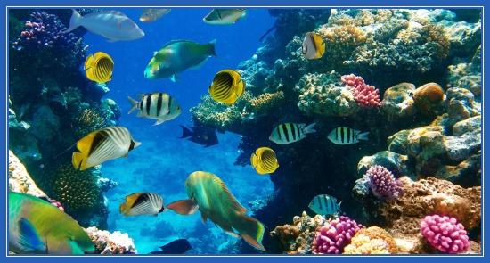 Рыбки у коралового рифа