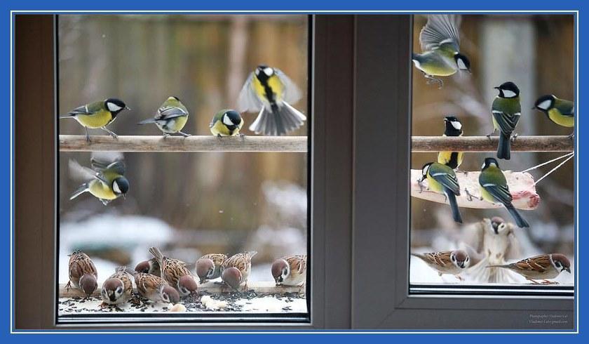 Птицы за окном, синицы, воробьи