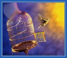 Птица в клетке, вылетела