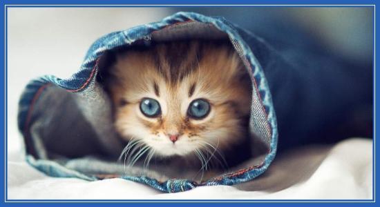 Кошечка, котенок
