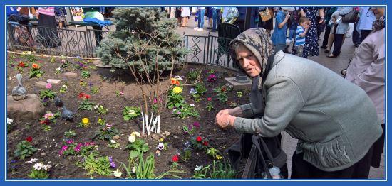 Бабушка Тамара кормил голубей. Покровский монастырь