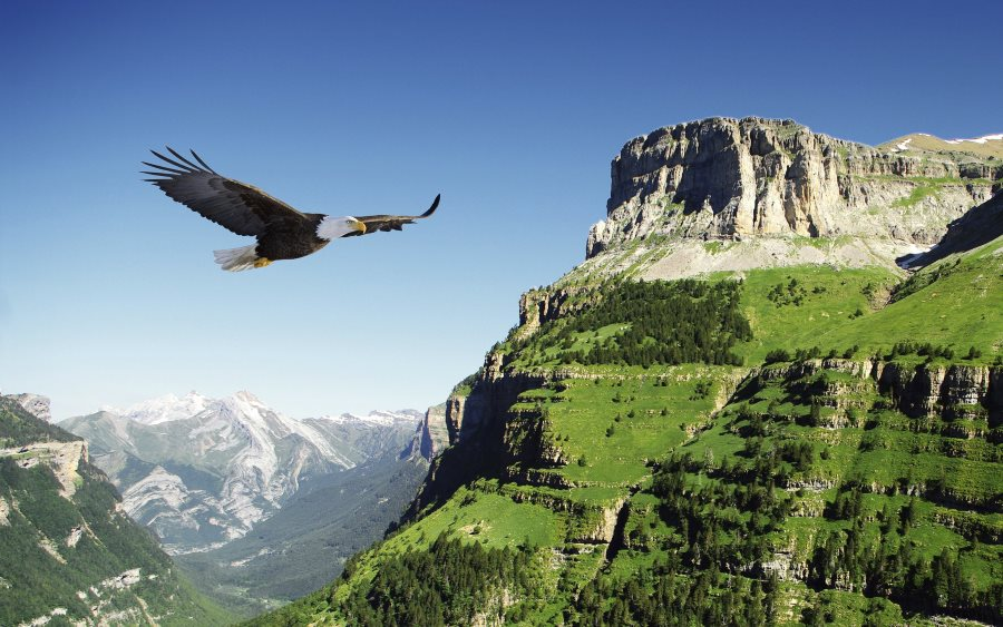 Петух и орел.Притча