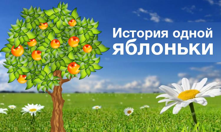 История одной яблоньки_1