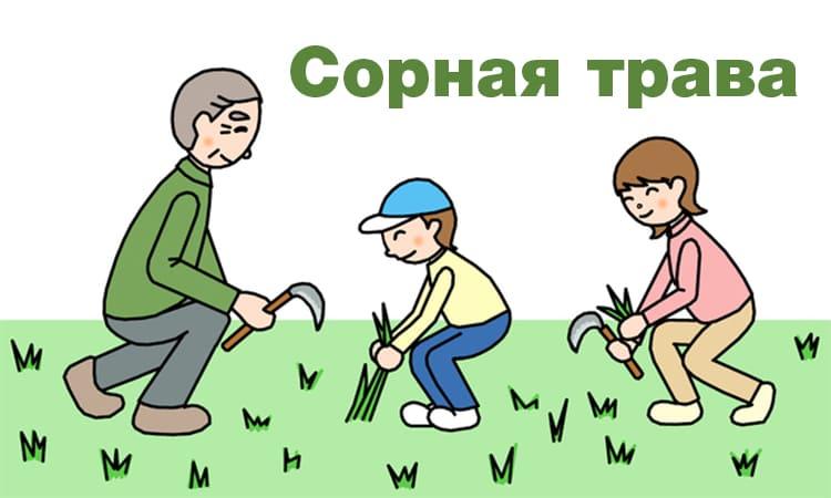 Сорная трава. Рассказ детям