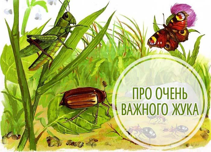 Про очень важного жука