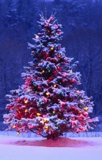 В лесу родилась елочка. Новогодняя песня