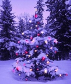 Легенда о Рождественской елке