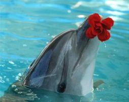 Благодарные дельфины! Рассказ детям