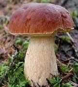 Как правильно готовить грибы? Советы по готовке