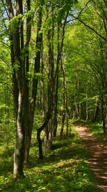 Лесная поэзия - стихи о лесе