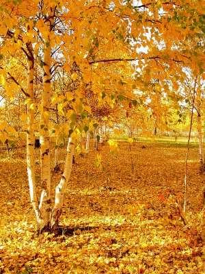 Ранняя осень. Прекрасные стихи