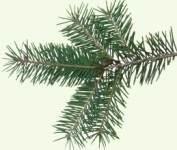 Начало Рождественсгого поста - 28 ноября