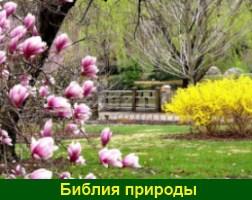 Вопрос священнику о книгах Господа