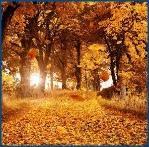 Осень, золотая листва