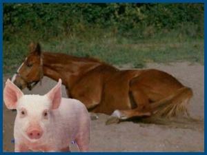 Лошадь и свинья