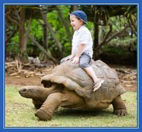 Черепаха, мальчик