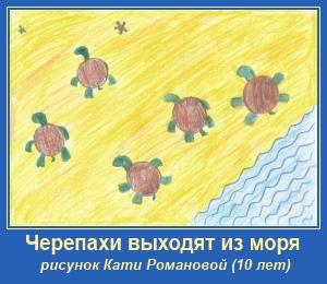Черепахи выходят из моря