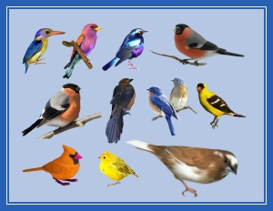 птицы разные