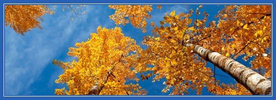 Осень, небо, береза
