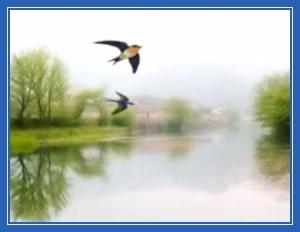 Птица, природа, полет