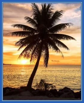 Пальма, одинокая, берег, море
